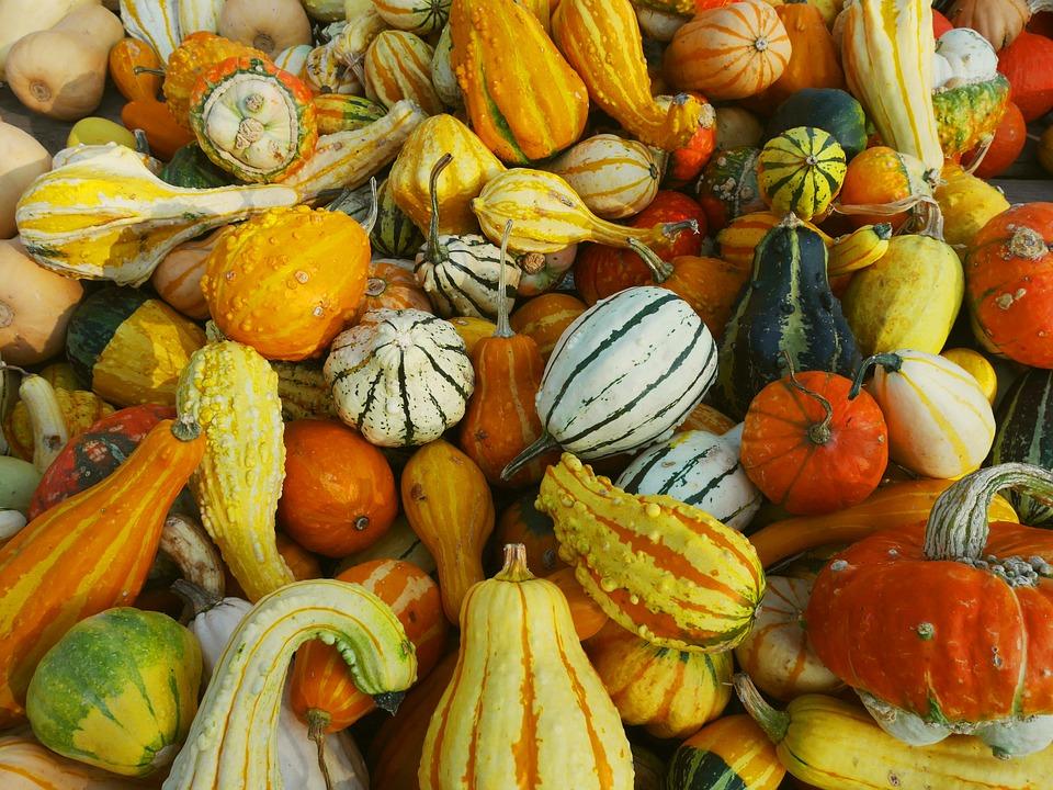 decorative-pumpkins